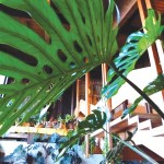 foto-ristorante35